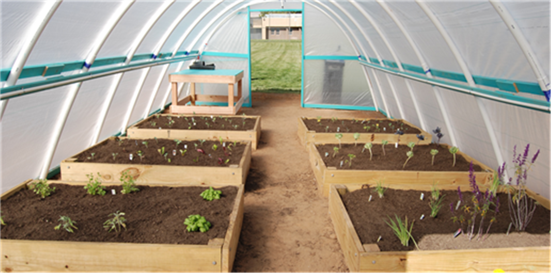 Greenhouse interior with raised beds containing small plants