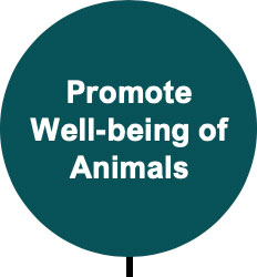 Promote Well-Being of Animals